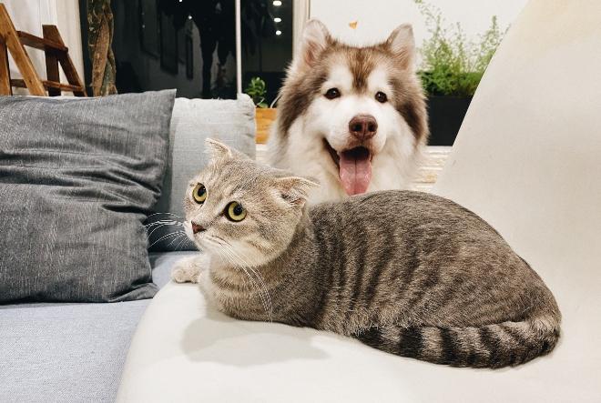 Zašto posjedovanje psa ili mačke ima duboko duhovno značenje?