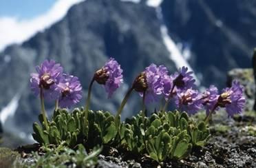 Himalaya pripravci – 100% prirodni i sigurni