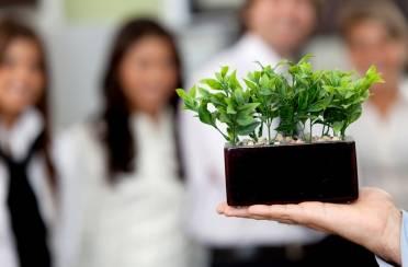 Idealne biljke za ured