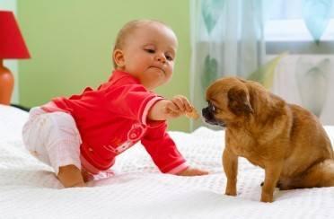 Sa psom do prvih koraka
