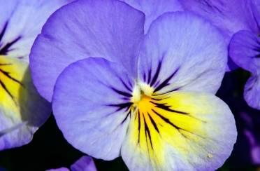 Balkon obojen cvijećem