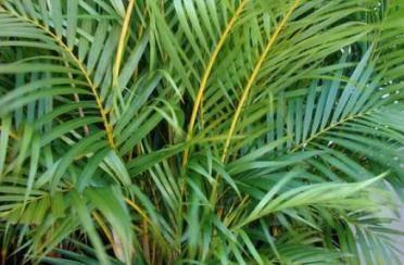 Pročistite zrak kućnim biljkama