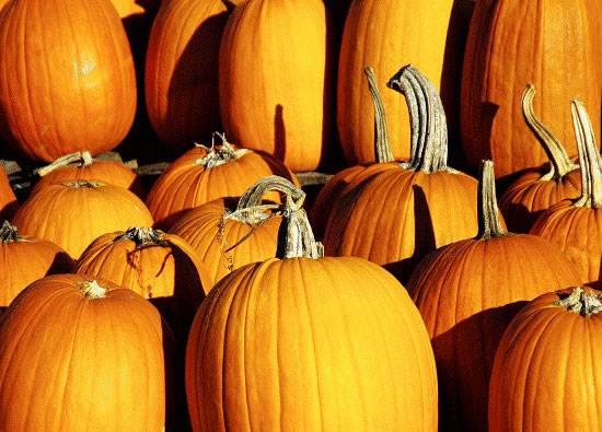 Superhrana za jesen