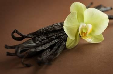 Sva bogatstva vanilije